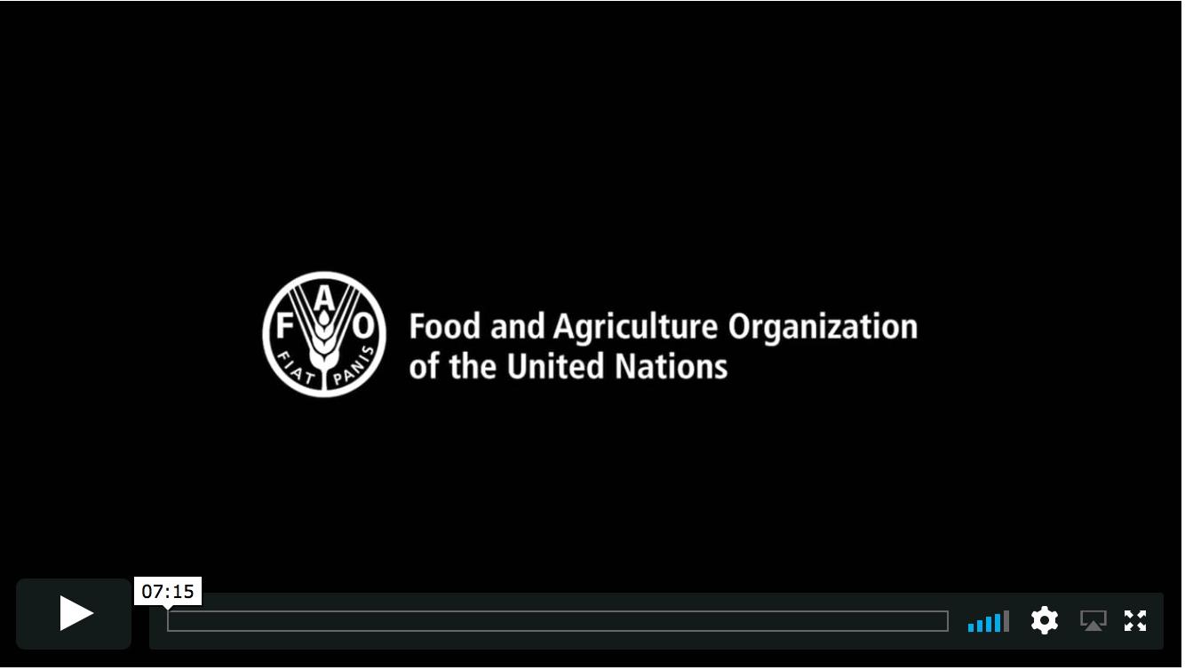 Video Production: (FAO) Georgia